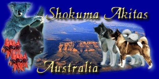 Shokuma Akitas - Golden Grove, Adelaide, South Australia